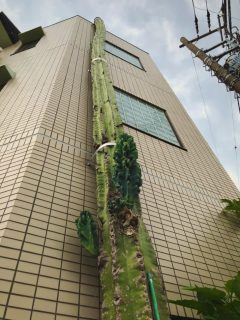 Cactus gigante en calles de Japón genera furor en Internet
