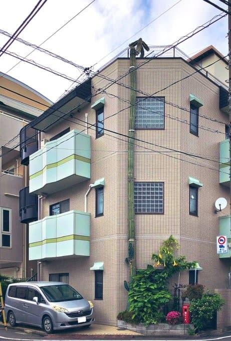 cactus gigante en Takinogawa Japon (3)