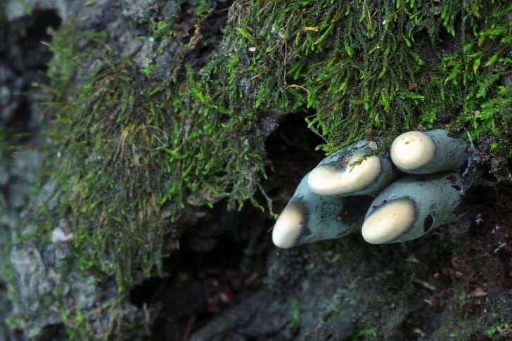 hongos extraños
