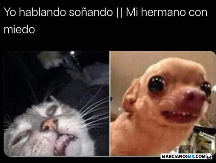 Marcianadas 438 03072020001411 (129)