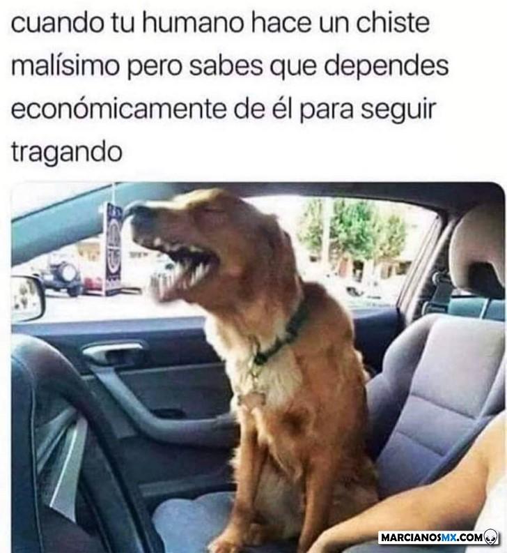 Marcianadas 439 10072020001316 (29)