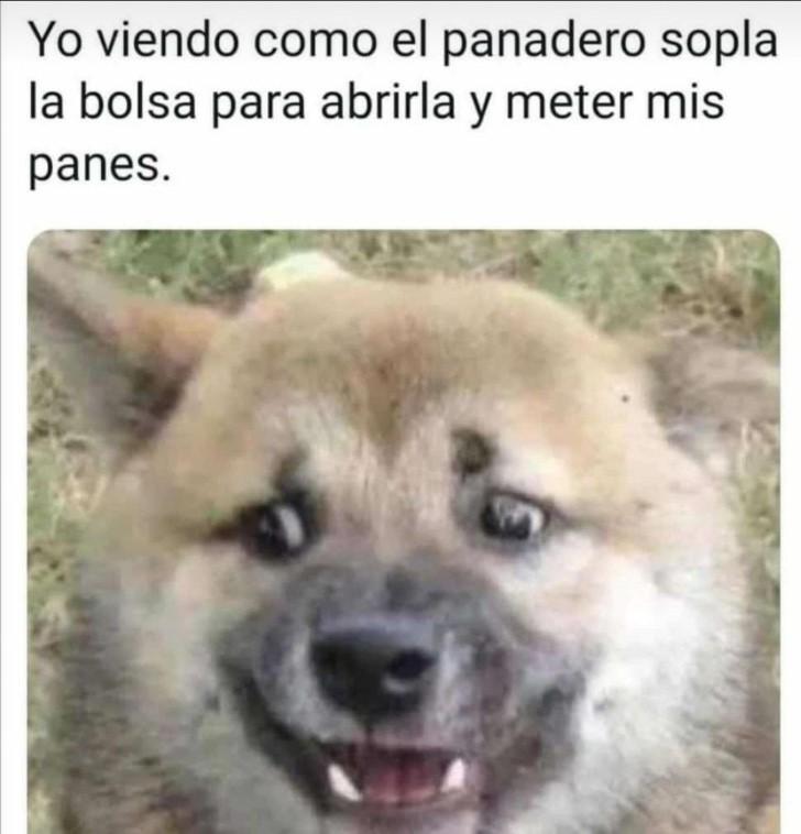 Marcianadas 439 10072020001316 (33)