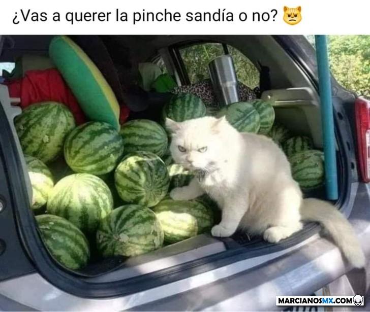 Marcianadas 439 10072020001316 (65)