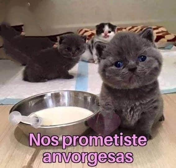 Marcianadas 442 31072020001251 (94)