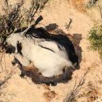 elefantes muertos en botsuana 2020 (2)
