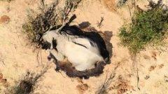 Más de 300 elefantes mueren en Botsuana bajo circunstancias misteriosas