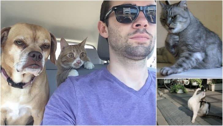 gatos dramaticos portada(1)
