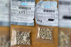 semillas chinas en los estados unidos(1)