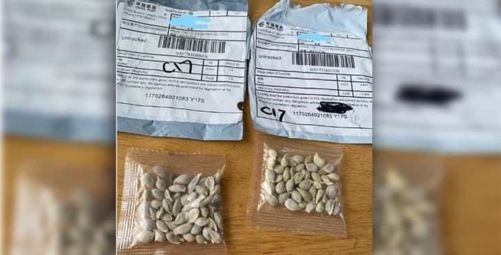semillas chinas en los estados unidos(1)(1)