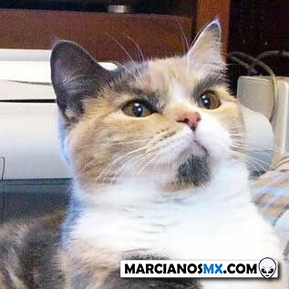 Marcianadas 443 07082020001309 (278)