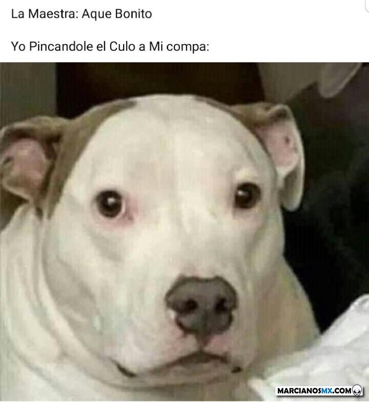 Marcianadas 443 07082020001309 (285)