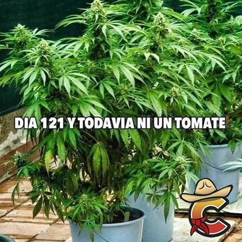 Marcianadas 443 07082020001309 (56)