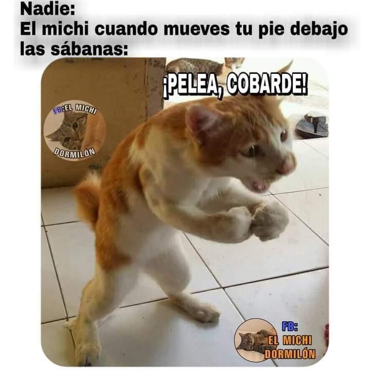 Marcianadas 444 14082020001436 (128)