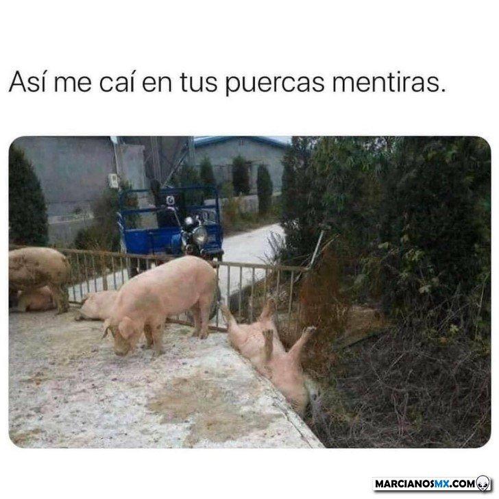 Marcianadas 445 21082020001323 (168)