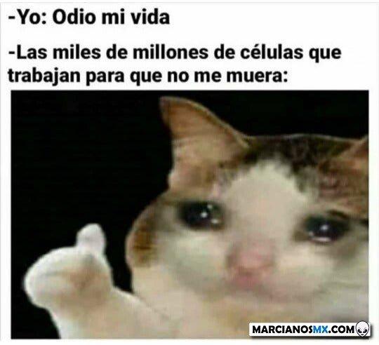 Marcianadas 445 21082020001323 (24)