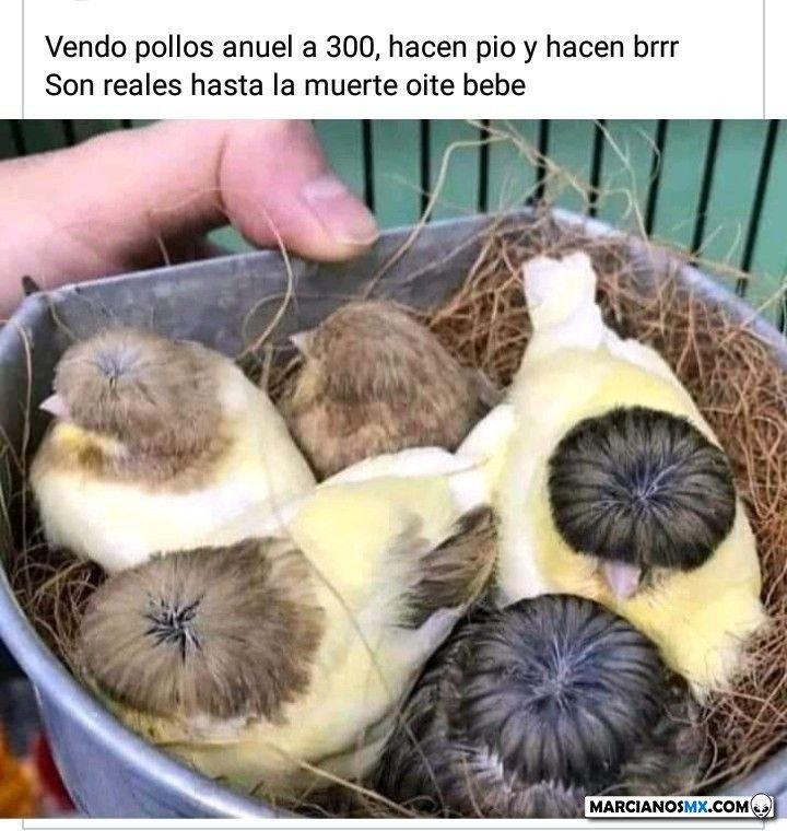 Marcianadas 445 21082020001323 (249)