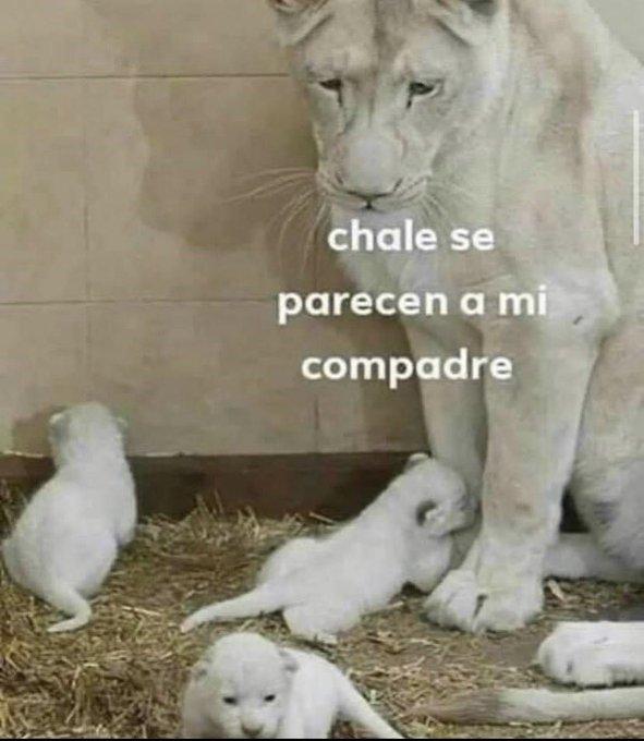 Marcianadas 446 28082020002223 (67)