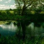 region pantanosa