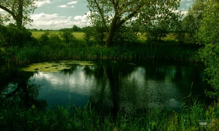 region pantanosa(1)