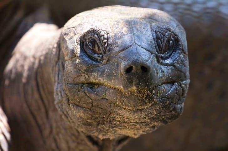 Adwaita tortuga mas longeva