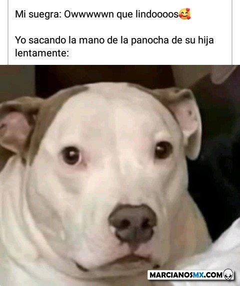 Marcianadas 447 04092020001317 (214)