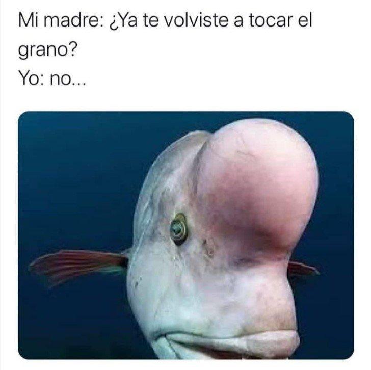 Marcianadas 447 04092020001317 (287)
