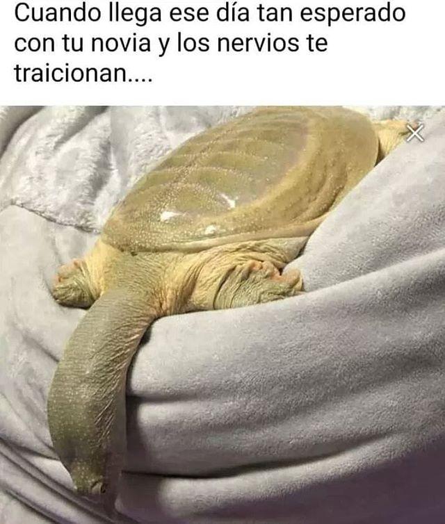 Marcianadas 447 04092020001317 (307)