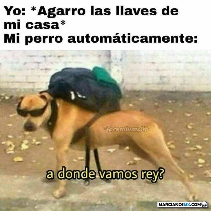 Marcianadas 447 04092020001317 (324)