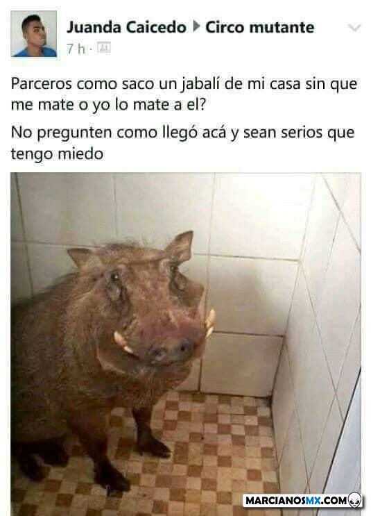 Marcianadas 447 04092020001317 (327)
