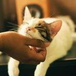 acariciando a un gato(1)