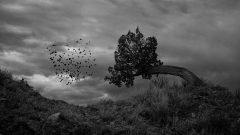 El árbol devorador de hombres de Madagascar