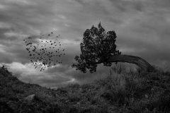 árbol devorador de hombres de Madagascar(1)