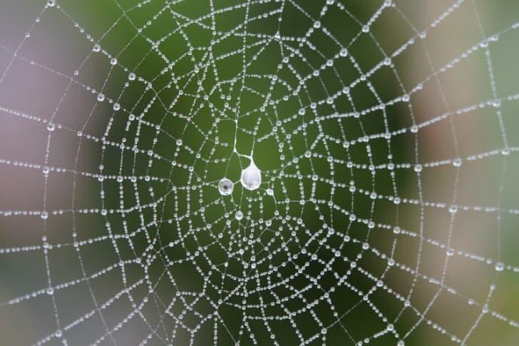 simetria en una telaraña(1)