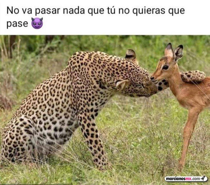 Marcianadas 457 13112020001452 (194)