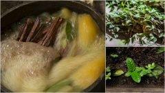 Sustancia de la ayahuasca promueve la generación de neuronas