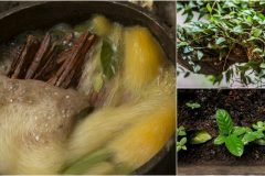 Preparacion de la ayahuasca