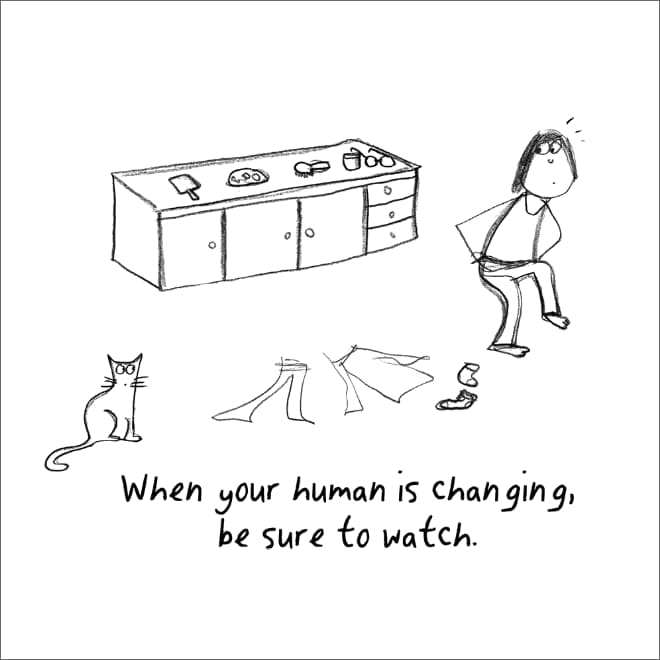 guia convertirte en gato (10)