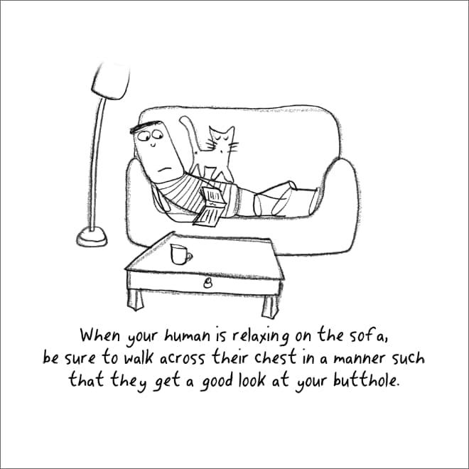 guia convertirte en gato (8)