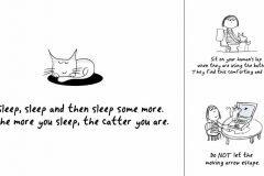 guia para convertirte en gato