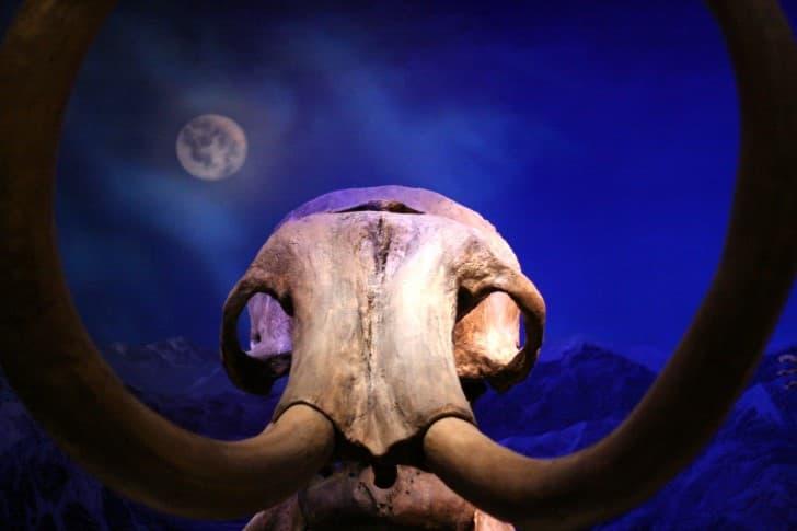 osamenta de un mamut(1)