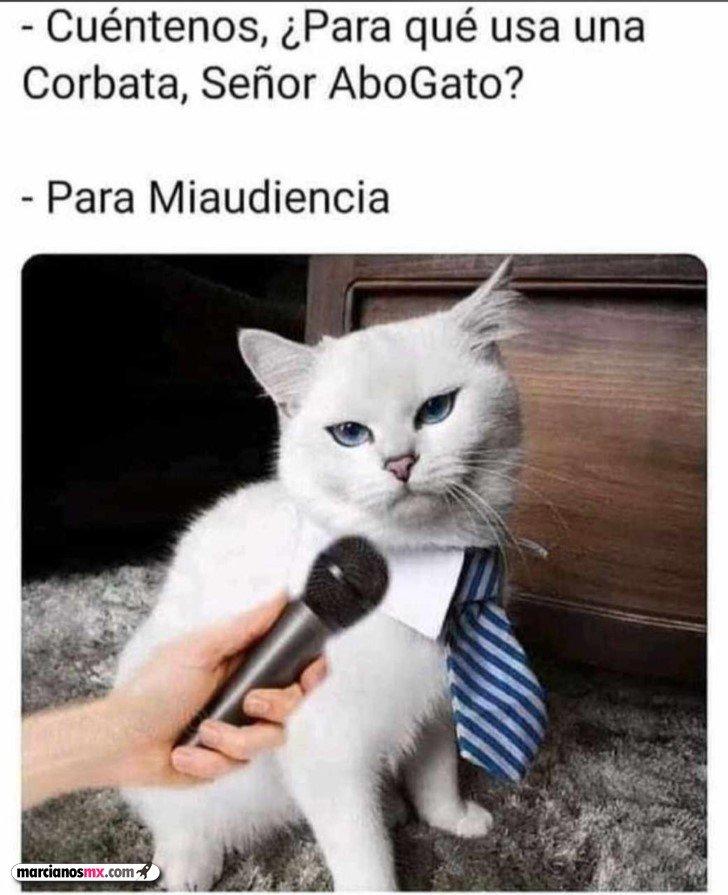 Marcianadas 462 18122020001440 (251)
