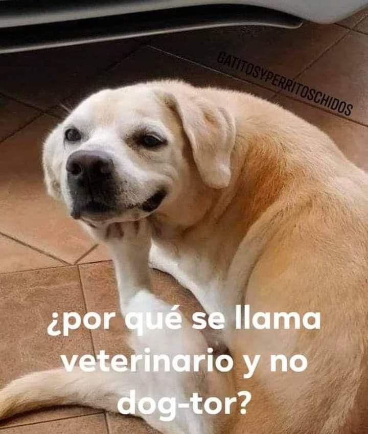 Marcianadas 463 01012021001513 (265)