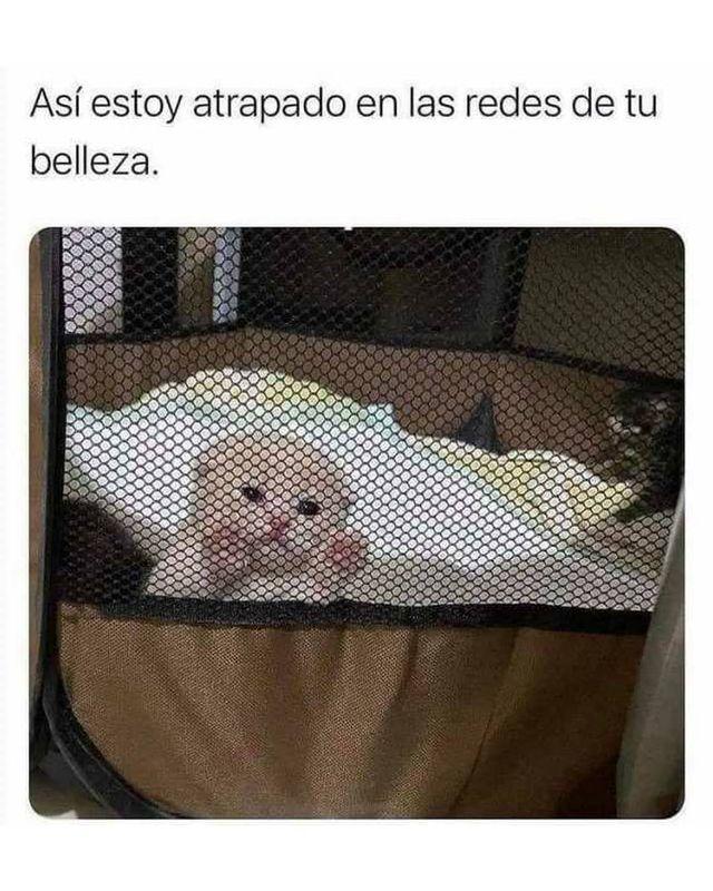 Marcianadas 463 01012021001513 (367)