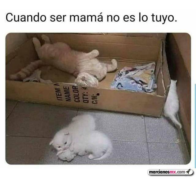 Marcianadas 463 01012021001513 (384)