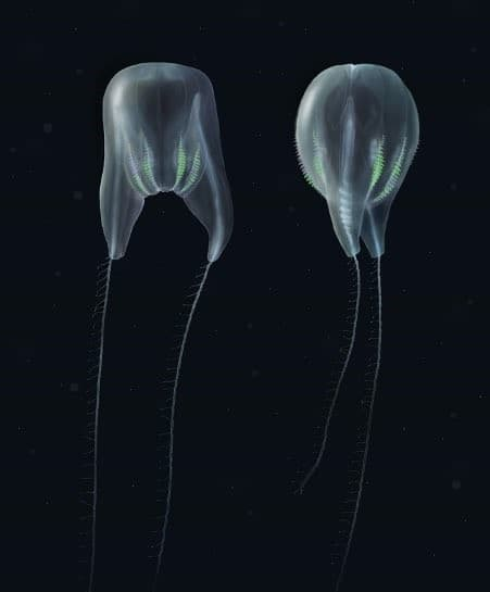 animal marino con forma de globo