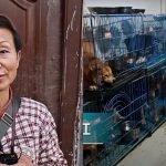 mujer en china mantiene 1300 perros