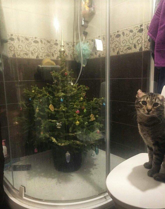 protegiendo arboles de navidad de las mascotas (18)