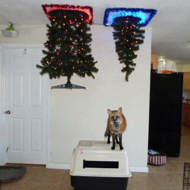 protegiendo arboles de navidad de las mascotas (19)