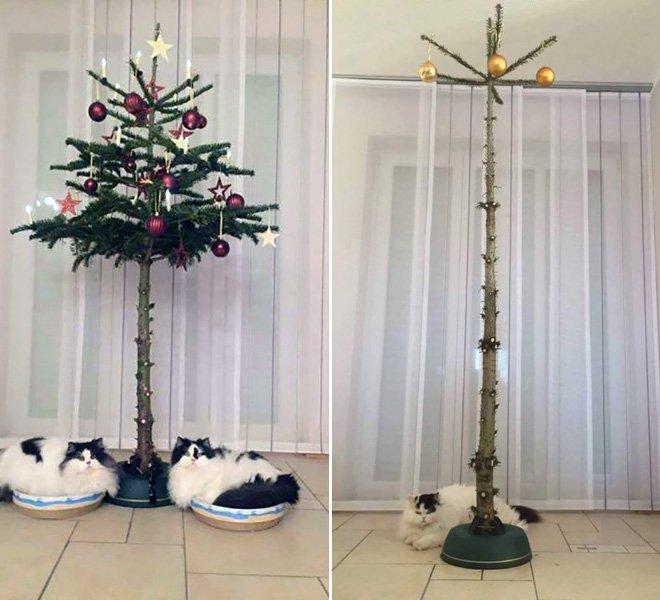 protegiendo arboles de navidad de las mascotas (20)