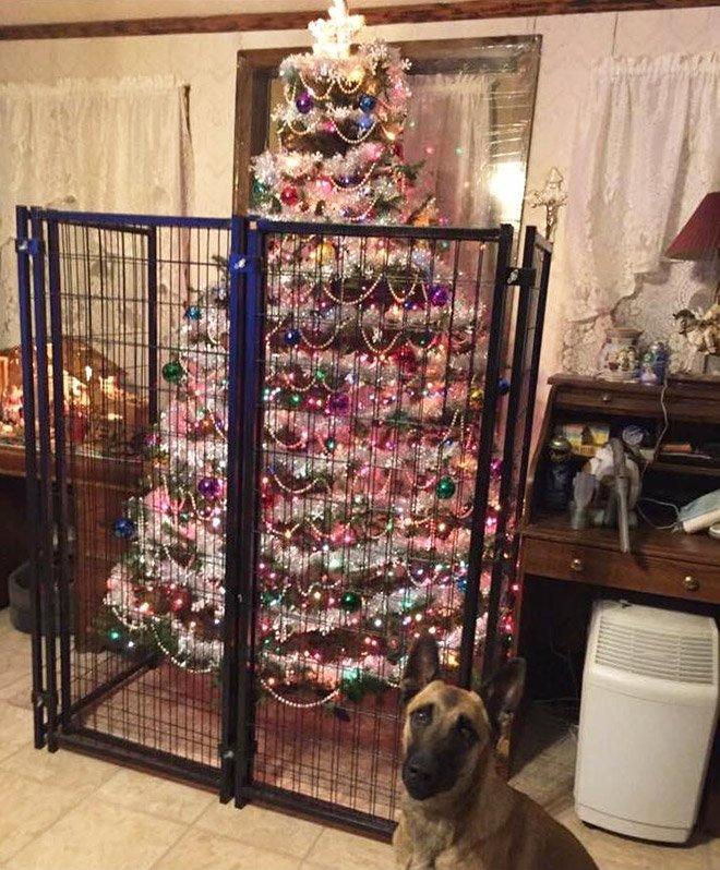 protegiendo arboles de navidad de las mascotas (4)